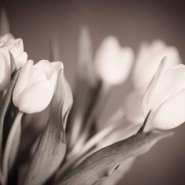 Zina Zinchik - Tulips