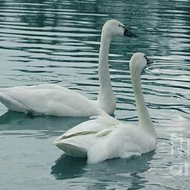 Kathleen Struckle - Tundra Swans