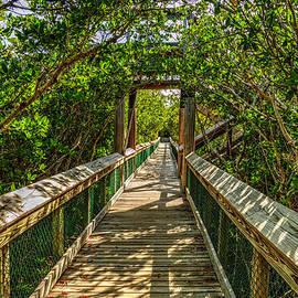 Julis Simo - Tunnel of Mangrove Green