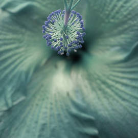 The Art Of Marilyn Ridoutt-Greene - Turquoise Flower