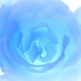 Kathy Barney - Rose Bleu