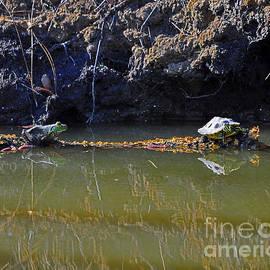 Al Powell Photography USA - Turtle and Frog on a Log
