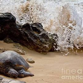 Kim Quintano - Turtle Bay