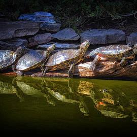 Bill Swartwout - Turtle Parade at Alligator Adventure