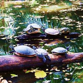 Chuck  Hicks - Turtle Soup