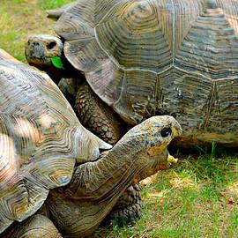 Ally  White - Tortoise Talk