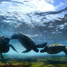 Sean Davey - Turtle Trio