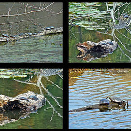 Mother Nature - Turtles Rule the Pond