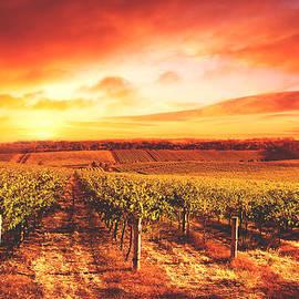 April McNett - Tuscan Vineyard