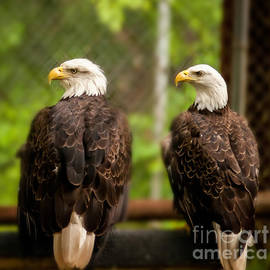 M and L Creations - Twin Bald Head Eagle