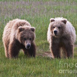 Phyllis Taylor - Twin Bear Cubs