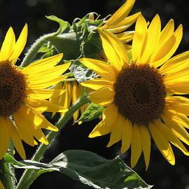 Diane Storer - Twin Flowers