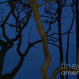 Anna Lisa Yoder - Twisted Trees at Twilight