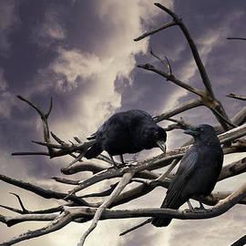 Linda Lees - Two Crows