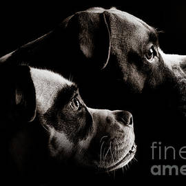 Jt PhotoDesign - Two Dogs
