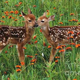 Chris Scroggins - Two Fawns Talking
