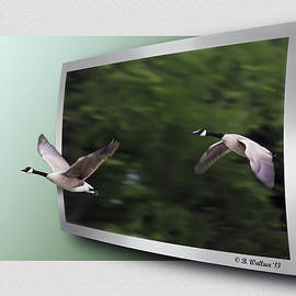 Brian Wallace - Two Geese In Flight - OOF