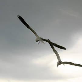 Irina Davis - Two in the sky