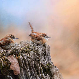 Jai Johnson - Two Little Wrens