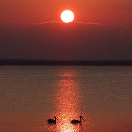 David T Wilkinson - Two Pelican Sunset