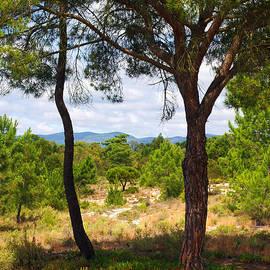 Carlos Caetano - Two pine trees