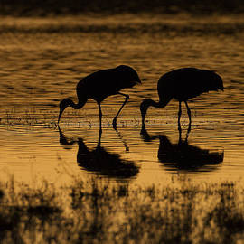 Ruth Jolly - Two Silhouetted Cranes