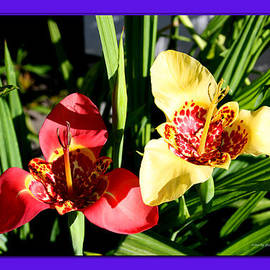 ILONA ANITA TIGGES - GOETZE  ART and Photography  - Two Tiger Lilies