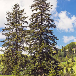 Cristina-Velina Ion - Two towering fir trees