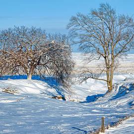 Nikolyn McDonald - Two Trees - Fence - Winter