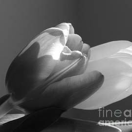 Karen Cook - Two tulips in black and white