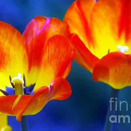 Kathleen Struckle - Two Tulips