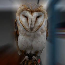 Colette V Hera  Guggenheim  - Typo Alba Owl Spain