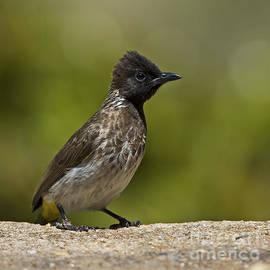 Nina Stavlund - Ubiquitous Bird...