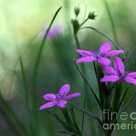 Neal  Eslinger - Ultra Violet