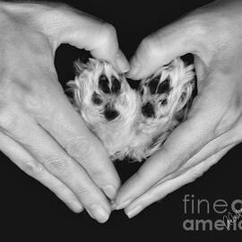 Andrea Auletta - Unconditional Love