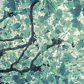 Susanne Kopp - Under A Canopy