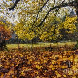 Ian Mitchell - Under The Autumn Trees