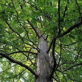 Cynthia Guinn - Under The Tree
