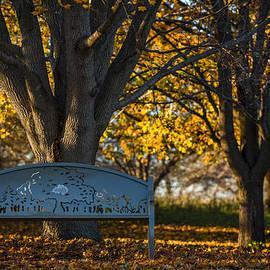 Sebastian Musial - Under The Tree