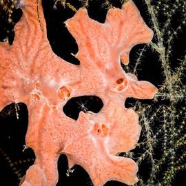Underwater Sponge