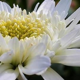 Bruce Bley - Unfolding Petals