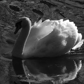 Pamela Phelps - Unfolding Wings  Swan of Light