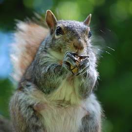 DejaVu Designs - Up Standing Squirrel