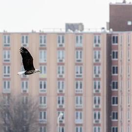 Randy Scherkenbach - Urban Eagle