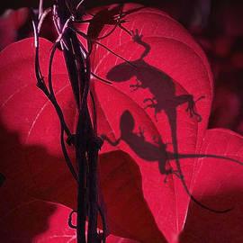 Schwartz - Valentine Geckos