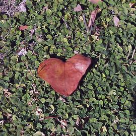 Deyanira Harris - Valentine Leaf