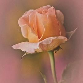 Richard Cummings - Rose No. 3
