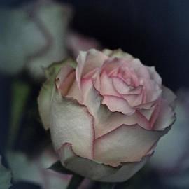 Richard Cummings - Rose No. 5