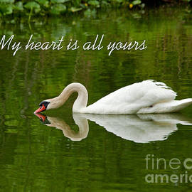Jerry Cowart - Valentines Swan Heart Original Fine Art Photograph Print And Greeting Card