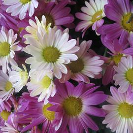 Navin Joshi - VEGAS Butterfly Garden Flowers Colorful Romantic Interior Decorations